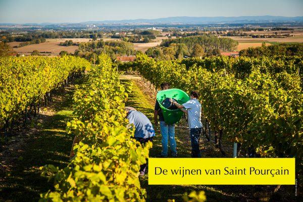 Wijnen van Saint Pourcain wijn